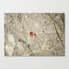 A bird on a winter's day Canvas Print