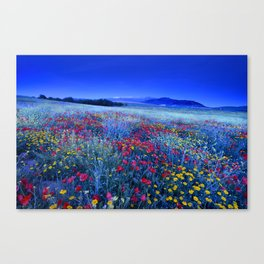 Spring poppies at blue hour Canvas Print