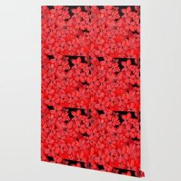 Naturshka 100 Wallpaper