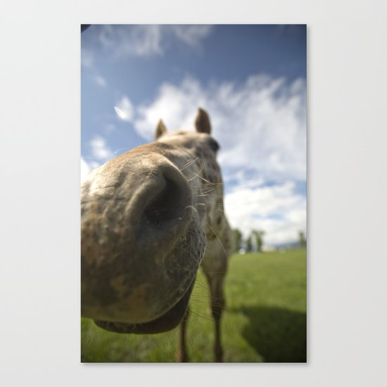 Horsing Around Canvas Print