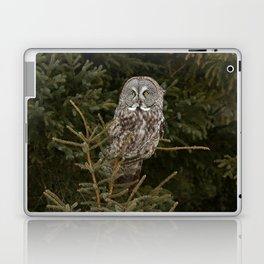 Pine Prince Laptop & iPad Skin
