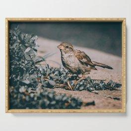 Summer Sparrow. Bird Photograph Serving Tray