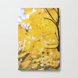 Amber Leaves, II Metal Print