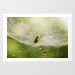 Along Came a Spider Art Print