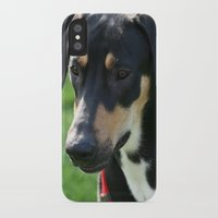 doberman iPhone & iPod Cases featuring Doberman by Ornithology