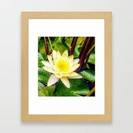 Dragonfly Lotus Framed Art Print