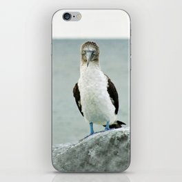 blue-footed booby iPhone Skin