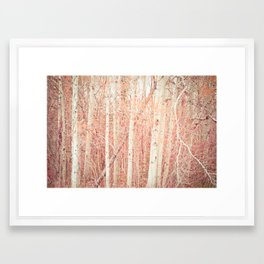 White Birch Trees Framed Art Print