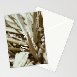 Desert Vibe Photography Stationery Cards