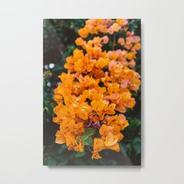 California Blooms III Metal Print