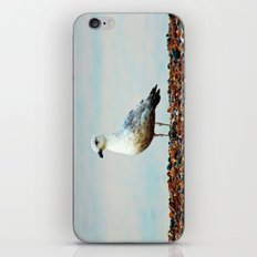 Saegull iPhone & iPod Skin