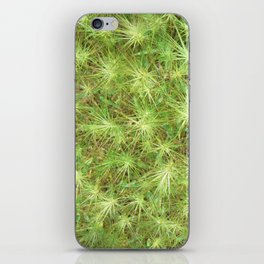 Young, green plants (grass) growing outdoor iPhone Skin