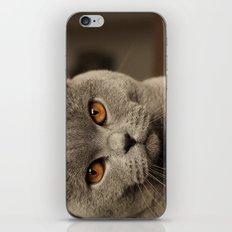 Diesel, the cat - (close up)  iPhone & iPod Skin