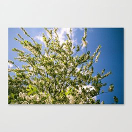 Sunny Day in Berlin Canvas Print
