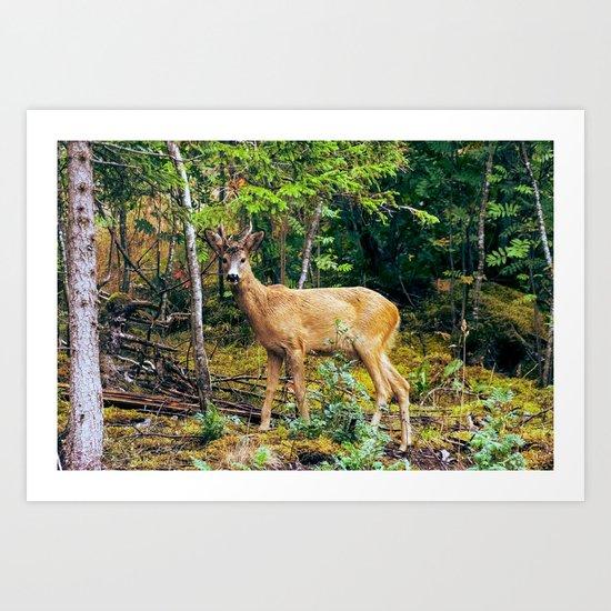 The Wandering Deer Art Print