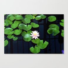 Lily pads and flower Canvas Print