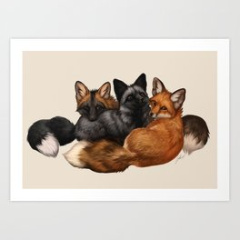 Fox Trio Art Print