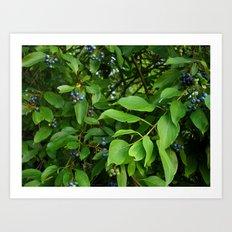 August Blue Art Print