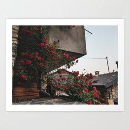 PHOTOGRAPHY - Corner roses Art Print