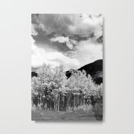 Aspens in Colorado Black & White Metal Print