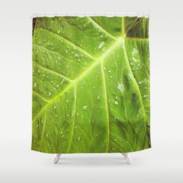 Alocasia After the Rain Shower Curtain