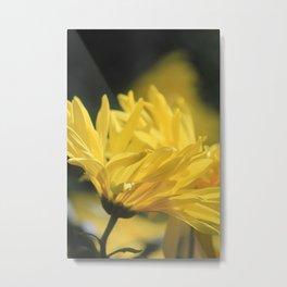 Yellow Flower in full bloom Metal Print
