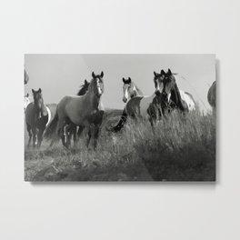 Cariboo Horses Metal Print