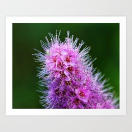Beauty Home Of The Little Spider Art Print
