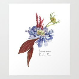 Blue Scabiosa Flower Art Print