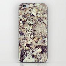 SandShells iPhone & iPod Skin