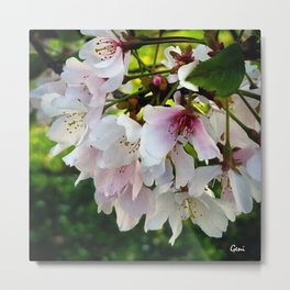 Cheery Cherry Blossoms Metal Print