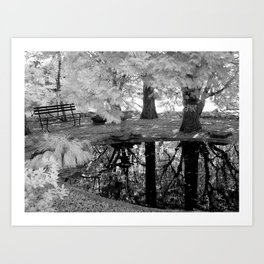 Serene Reflections Art Print