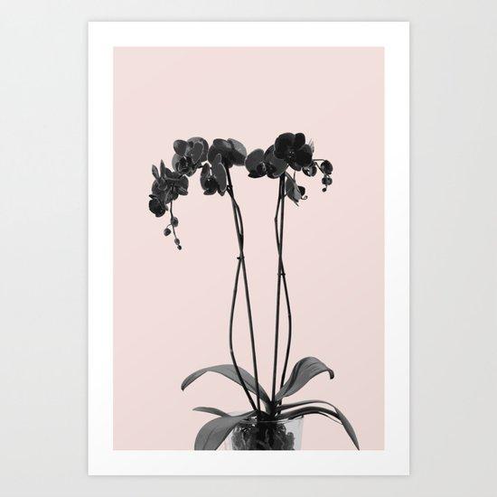 Orchid summer bloom Art Print