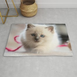 #Kitten #starts #sneaking up #early Rug
