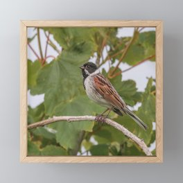 Reed Bunting Framed Mini Art Print