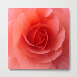 Rose Delicate Metal Print