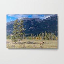 A Jasper Bull Elk Metal Print