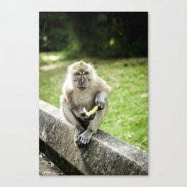 Penang Monkey  Canvas Print