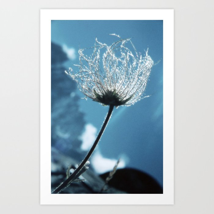 Flower shining in the light snowy mountains #1 Art Print