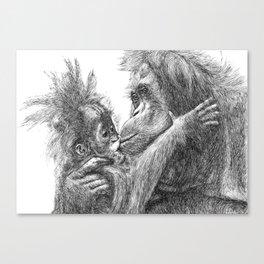 Orang Utan Canvas Print