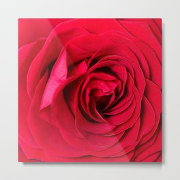 Red Rose Close-up #decor #society6 #buyart Metal Print