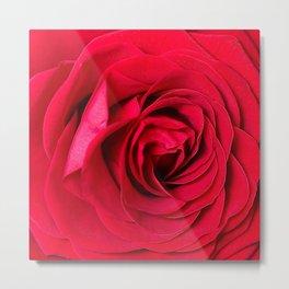 Red Rose Close-up #decor #society6 #buyart Metal Print