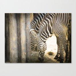 Les zèbres de Vincennes Canvas Print