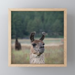 Llama Portrait - 1 Framed Mini Art Print