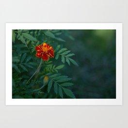 Flowers Tagetes Art Print