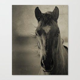 BREEZE  - Old Friends Collection Canvas Print