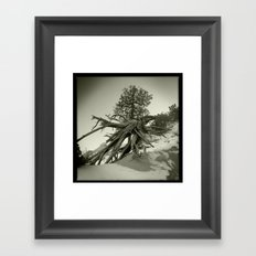 Tree at Tent Rocks Framed Art Print