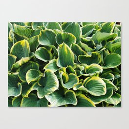 Leafy Green with Envy Canvas Print