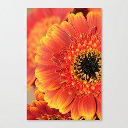 Sunset Gerbera Daisy macro Canvas Print