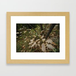 Automn 1 Framed Art Print